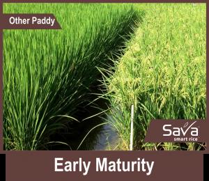 Early-Maturity