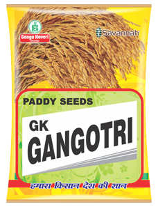 GK-Gangotri